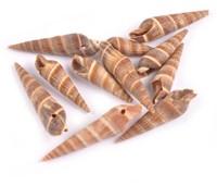 Kerala schelpen met klein gaatje voor sieraden +/- 20st 30-43mm schelpjes voor sieraden