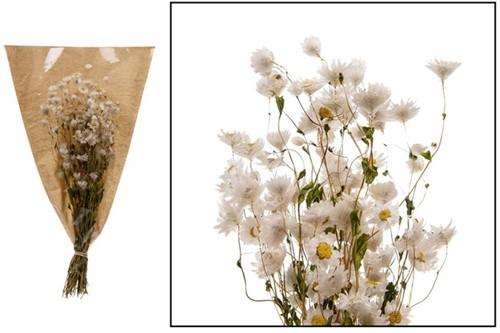 Rodanthe - White natural bundel. droogbloemen