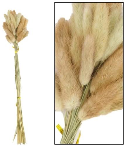 Lagurus ovatus 100gram. Natural  Lagurus ovatus