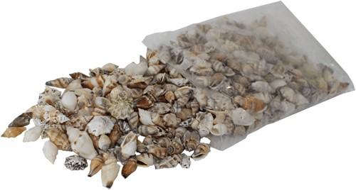 Schelpenmix  vulschelpen 2.5-3.5cm Assortie vulschelpen  1 kilo