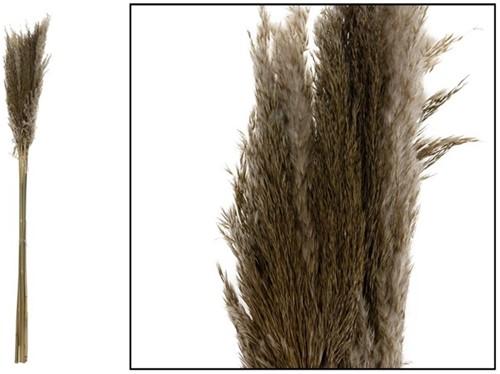 Pampas grass Jaxx 100cm 6pc - Natural Large Pampas grass Jaxx 100cm 6pc - Natural