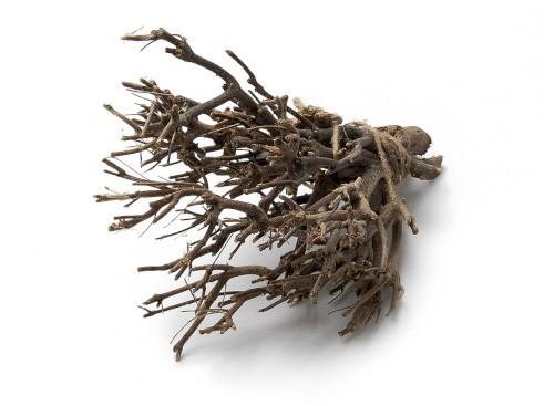 John Branch Stronk ±35cm natural 500g