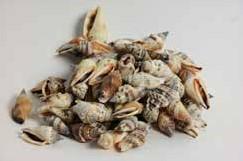 Aninikad schelpen 300 gram