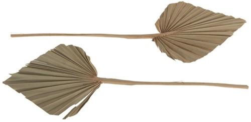 Palmspear medium 4pc pbm - Natural Palm spade blad