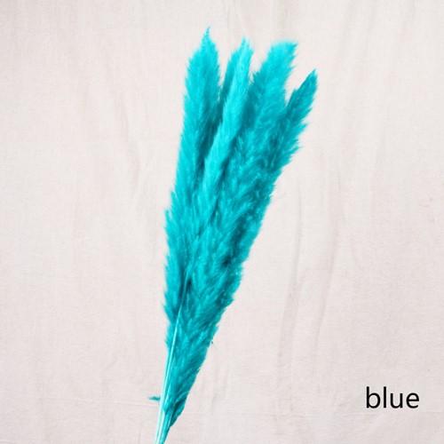 Klein Pampasgras Phragmites Blue /bundel 7  Pluimgras graspluimen