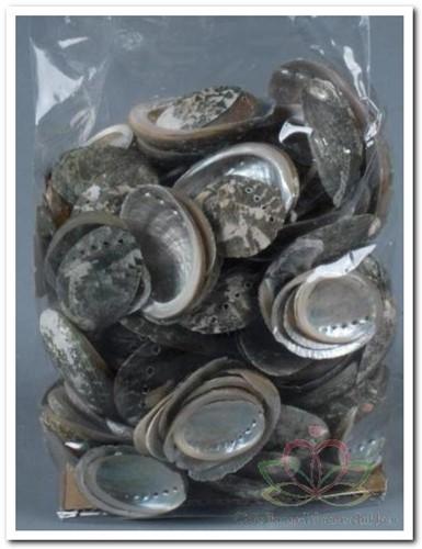 Haliotis Pulcherrima schelpen 500 gram