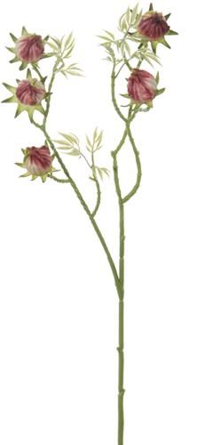 Hybiscusknop Paars 58 cm. Hybiscus Bij