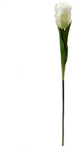 Tulp Parkiettulp WIT/ stuks. 56cm. Tulpen
