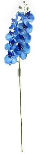 PHALAENOPSIS Orchidee SPRAY Blauw 105 cm. PHALAENOPSIS ORCHID SPRAY