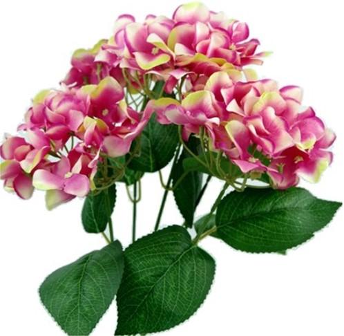 Hortensia GROOT HYDRANGEA BUSH NEW Pink Bicolor49 cm. Groot! flowerwall vuller