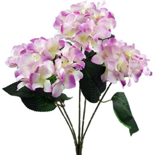 Hortensia GROOT HYDRANGEA BUSH NEW Ivory-Lila 49 cm. Groot! flowerwall vuller