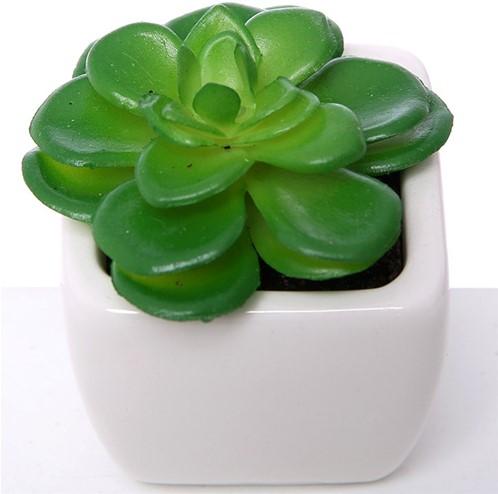 Actie SUCCULENT Groen in wit potje 7cm 868753 Succulent