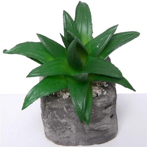 Actie SUCCULENT in steeneffectpotje 8 cm Succulent