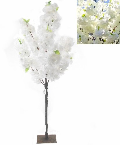 Bloesemboompje 180m White Prachtig