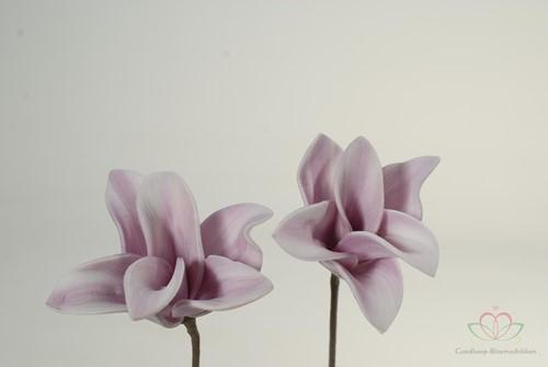 Cymbidium flower 12pc foambloem Skin Cymbidium flower 12pc