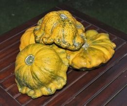 Gelber Englischer Custard - 50 zaden Om te vullen