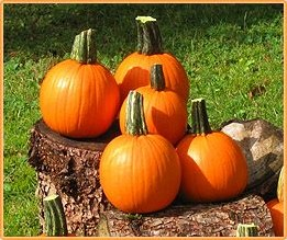 Half Pint F1 Mini Halloweenpompoentje 400-700 gram - basiseenheid Halloweenpompoen Mini