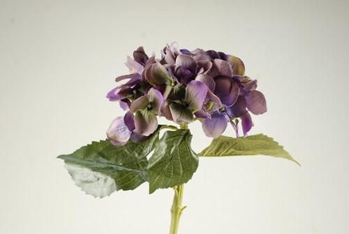 Hortensia Zijdebloem Purple VVD Hortensia Zijde