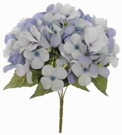 Hortensia HYDRANGEA Bush 6 BLUE Hortensia