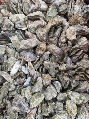 Oesterschelpen fijn, 250 gram