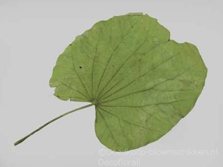 Actie Blad Buganiya leaves Groen 25st/pak Blad Buganiya leaves Groe