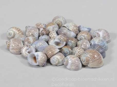 Pull Muttai schelpen blauw, 500 gram