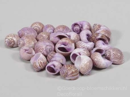 Pull Muttai schelpen lila, 500 gram