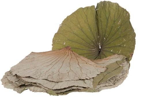 LotusBLAD per PAK +/- 454gr Lotusblad