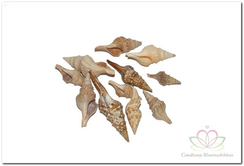 Chinna schelpen 750 gram