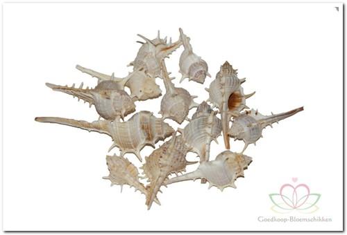 Thorn schelpen klein 1 kilo