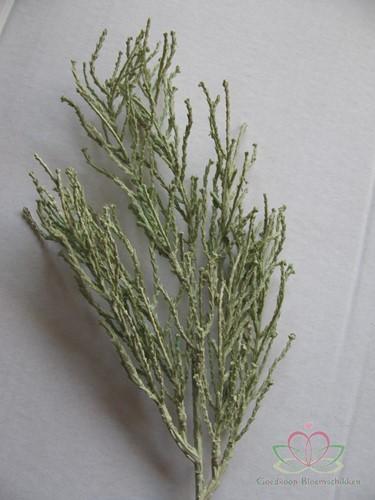 Ceder blad vertakt licht grijsGroen  Grassen Blad