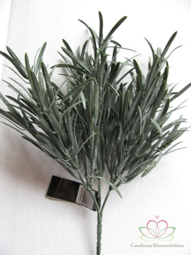 ROSE MARY BUSH X 3 DARK GREEN / stuk Grassen Blad