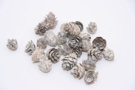 Omorica Omerica cone White Baby Spruce 2-3cm