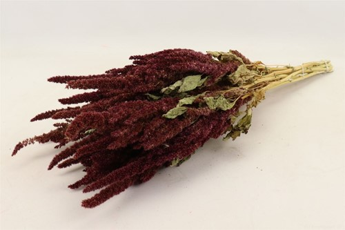 Amaranthus natural Red Bunch Amaranthus Red Sleeved Rode Kattenstaart in hoes