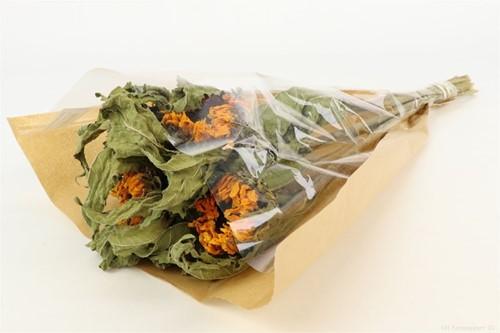 Zonnebloem Sunflower Helianthus Bundel +/- 60cm droogbloemen in hoes