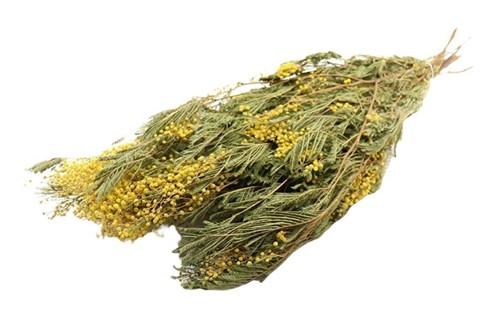 Bundel Mimosa L60.0 Heel mooie fijne bloemetjes