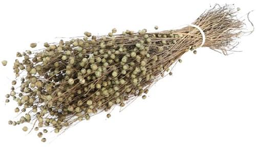 Alsi Grass Bundel 100 gr +/- 60cm droogbloemen
