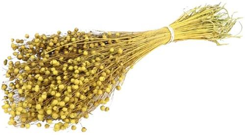 Alsi Grass Mosterdgeel Mustard Bundel 100 gr +/- 60cm droogbloemen