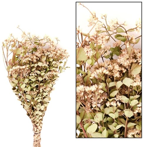 Alecrim 100gr 75cm - Natural droogbloemen