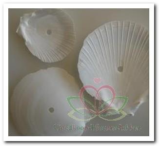 Amusium Japonicum Geboord Hole 4 mm / kg Geboorde schelpen