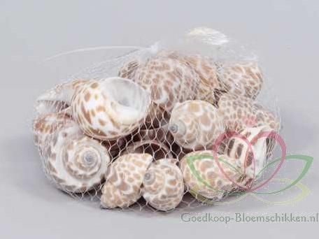 Babylonia Spirata schelpen +/- 250 gram
