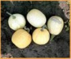 Ball Round White Gourd - basiseenheid Ball white