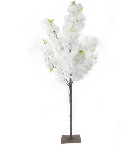 Bloesemboompje 120m Wit Prachtig