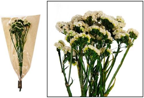 Statice flower 35gr - White Boeket in krafthoes