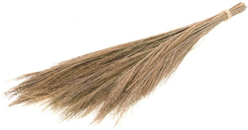 BROOM GRASS 100GR 65CM NATURAL Graspluimen
