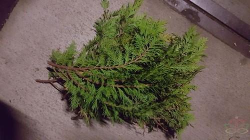 Bundel coniferenGroen VERS kerstGroen