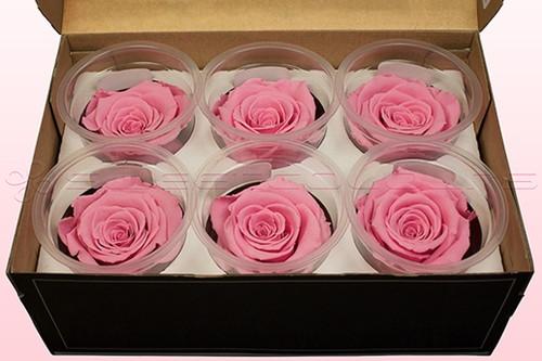 Geconserveerde rozen Roze L Doos6 Geconserveerd