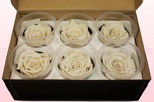 Geconserveerde rozen ROOMwit Doos6 Geconserveerd