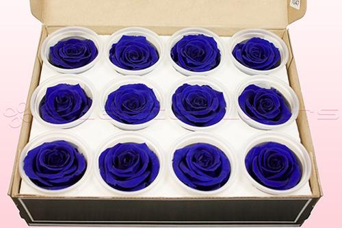 Geconserveerde rozen Blauw M DOOS12 Geconserveerd