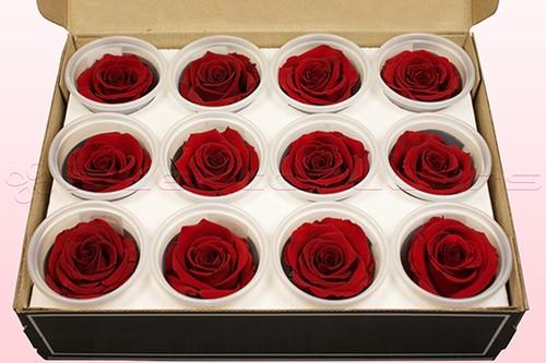 Geconserveerde rozen Donkerrood M DOOS12 Geconserveerd
